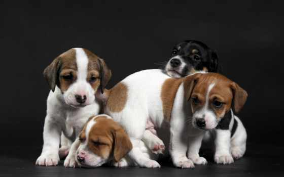 animal, щенок, rocks, собака, high, cute, like,