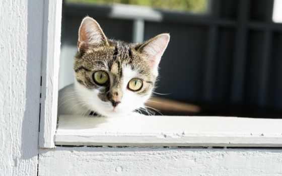 кот, waiting, kucing,