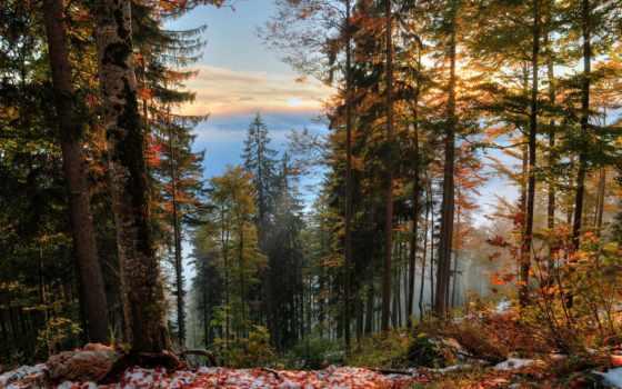 природа, trees, россии, фотографий, лес, леса, года, яndex, осень,