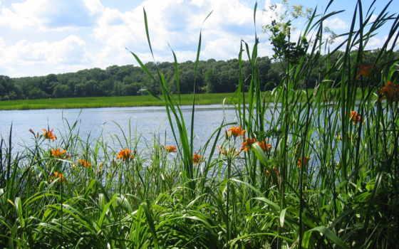 природа, река, трава, flowers, лес, море, cvety, lakes, reki,
