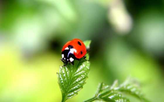 ladybug, коровка, god, ну, рисунок