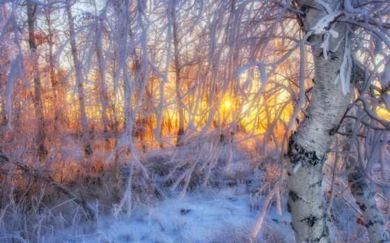 дерево, лес, картинка, уж, branch, loaded, best, свет, winter