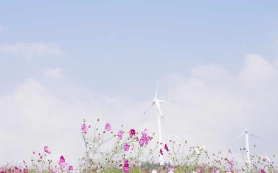 природа, цветы Фон № 31751 разрешение 1920x1080