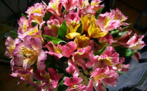 букеты, цветы, кошки