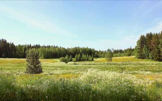 summer, цветы, поле