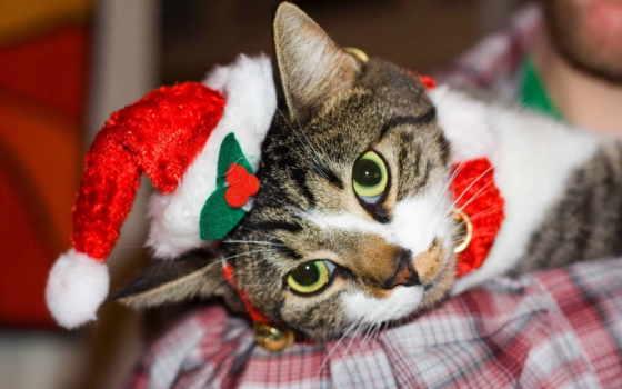 новогодние, кошки, собачек