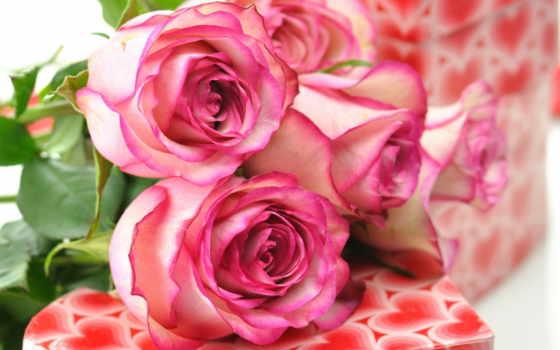 roses, розовый букет,
