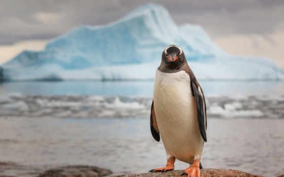 минимализм, пингвин, льдина,