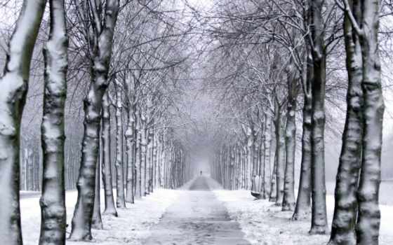winter, снег, trail, trees, park, mobdecor,