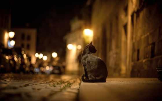 боке, город, улица, кот, ночь, огни, дорога, bokeh, черная, брусчатка,