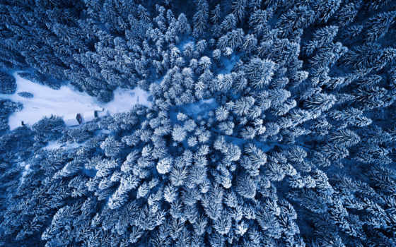 prince, winter, лес