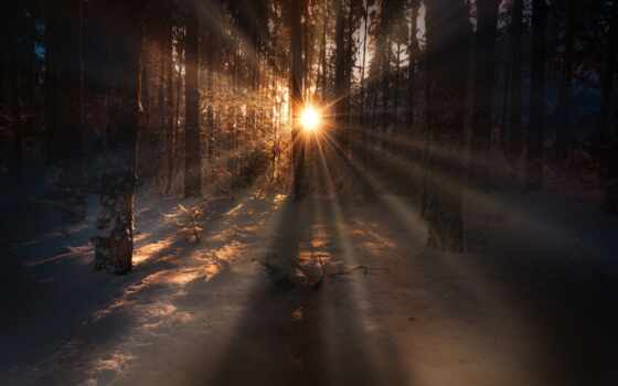 лес, fore, winter, wald, тег, снег, ray, ночь