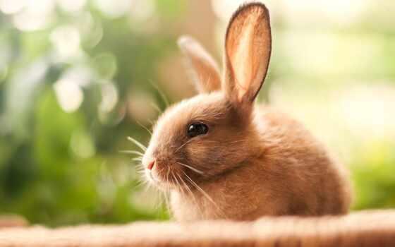 krolik, крольчонок, zaichik, животное, размытость, fon, собака, трава, белый, kachestvennyi, чёрный