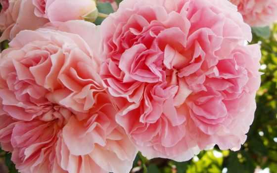 Цветы 20073
