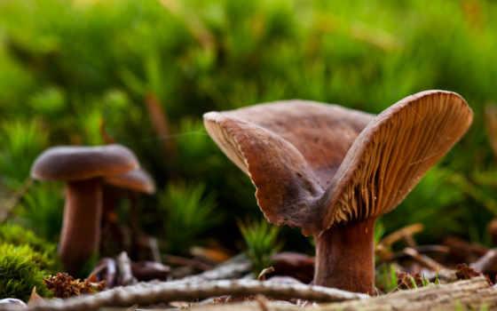 name, image, 森林中的蘑菇桌面高清壁纸