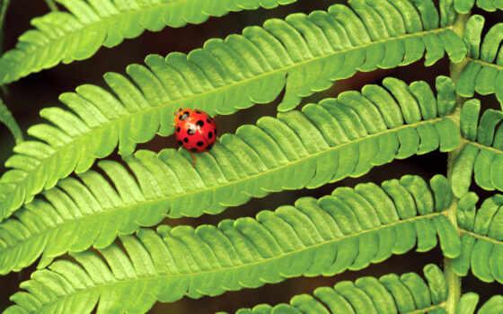 папоротник, насекомые, коровки