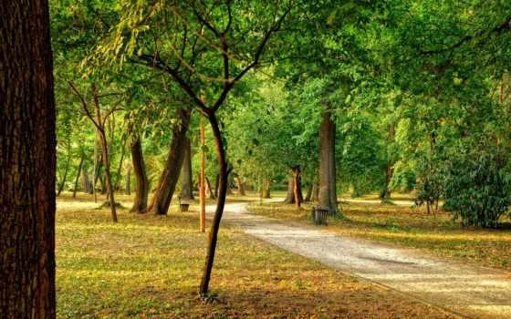 park, trees, landscape