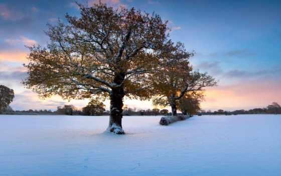 зимней, природы, фона, collector, поры, природа, дек, пейзажи -, зимних, пейзажей, красавица,