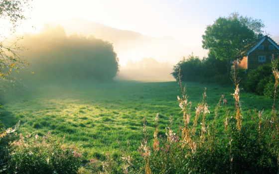 утро, деревне, летнее, туманное, природа,