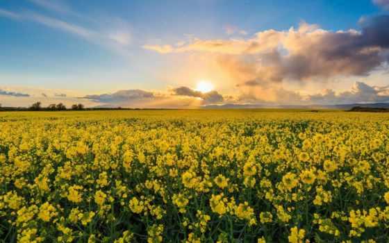 поле, tags, ireland, буря, photography, mnm,