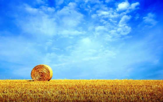 summer, landscape, коллекция, день, june
