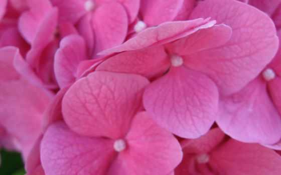 цветы, розовые Фон № 2162 разрешение 1920x1080
