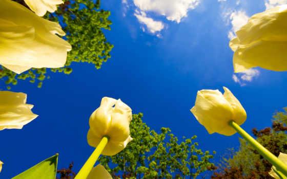 цветы, небо