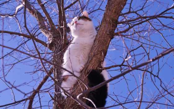 кот на дереве Фон № 6488 разрешение 4288x2848