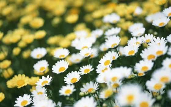 летние, лето, цветы