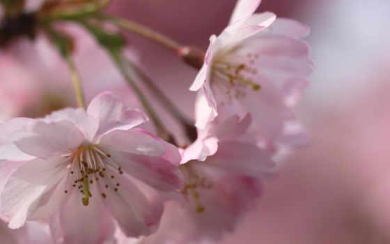 mixed, февр, цветы