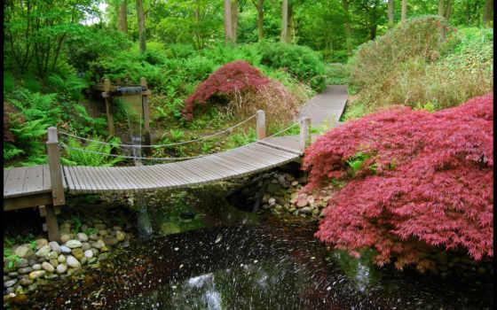 japanese, сады, garden