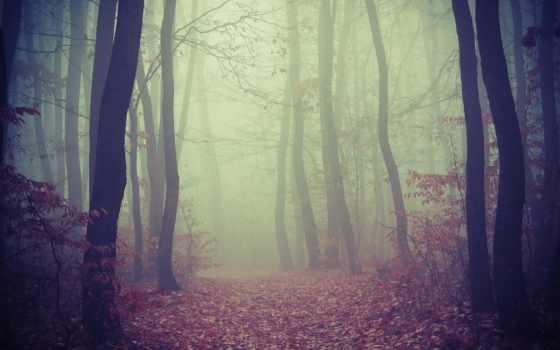 лес, foggy, дорога