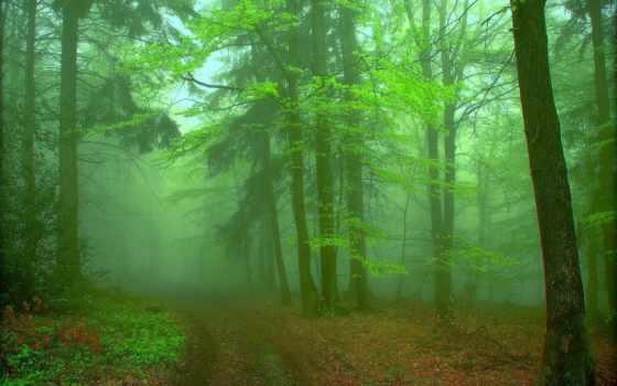лес, туман, landscape Фон № 141874 разрешение 2560x1600