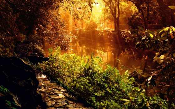 rays, рассвет, свет, trees, лес, sun, солнца, утро, туман, природа,