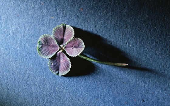 фон, цветы, гладь, black