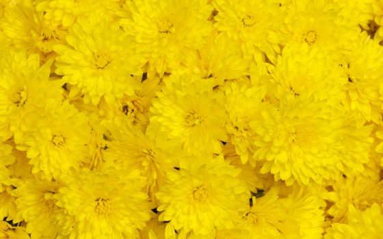 Цветы 25506