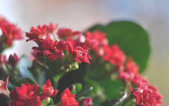 flowers, цветы, картинок