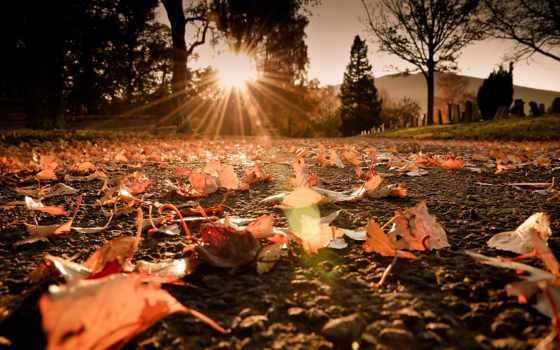 осень, листва, макро