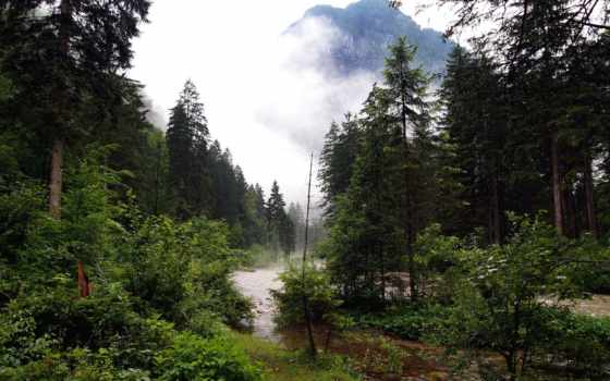 ручей, лес, река, туман, гора, природа, осень,
