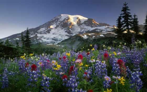 поле, цветочное, цветы, горах, загрузил, мэри, природа, landscape, маков,