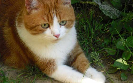 kaķis, animals, страница