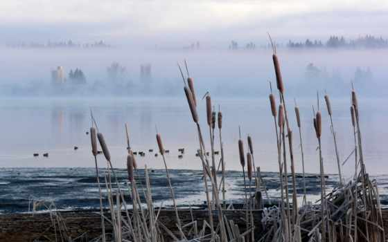 swamp, камыш, рогоз, туман,