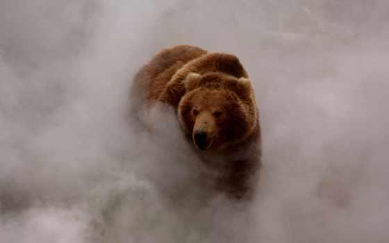 медведей, earth, movie, выберите, сниматься, медведи, такие, documentary, ложатся, землю, прогретую, дни, region,