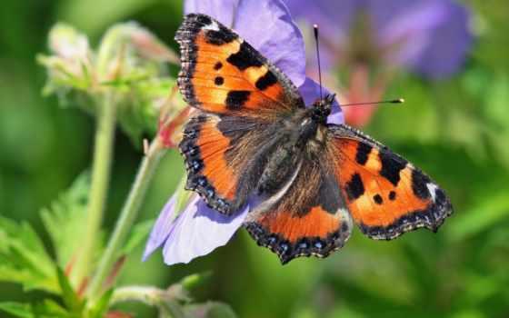 макро, цветы, бабочка