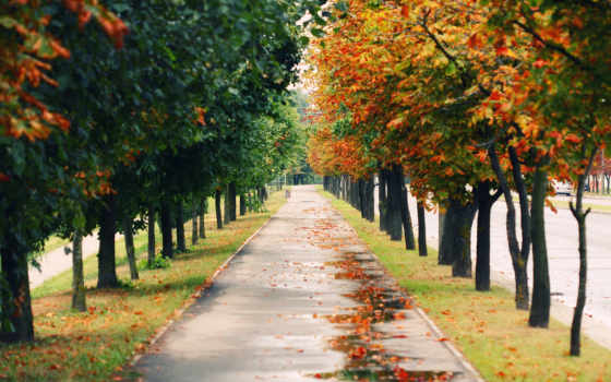 аллея, осень, деревя