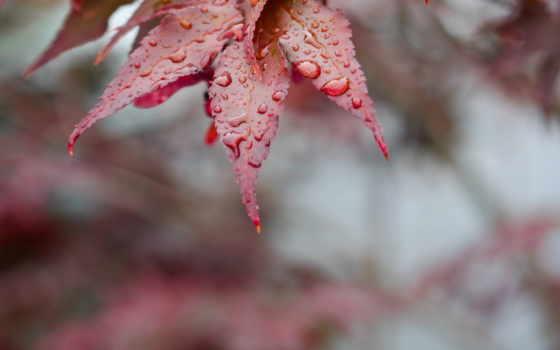 осенние, leaf, осень, аватарки,