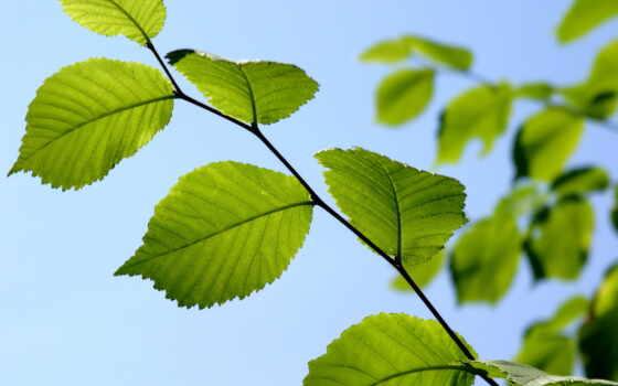 листва, тв, branch, зелёный