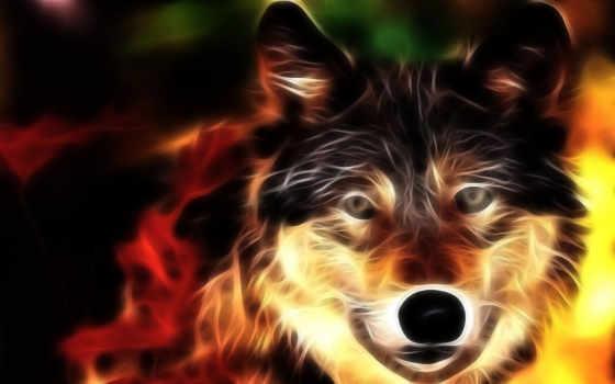 волк, животные Фон № 8229 разрешение 1680x1050