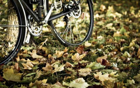велосипед, листья
