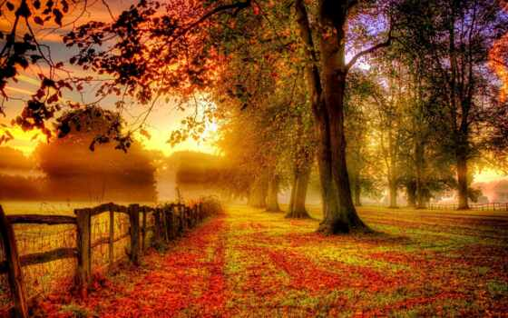 природа, осень, года